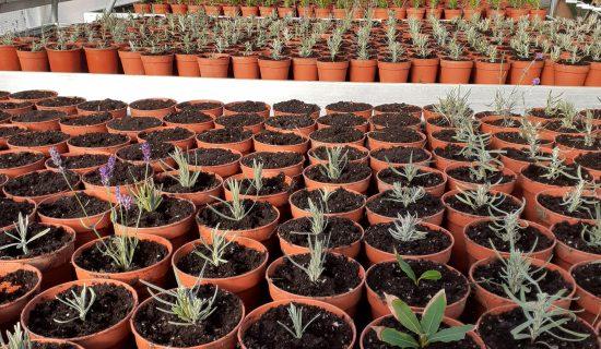 Stekkenmarkten / Moestuin plantjes / Kruiden plantjes
